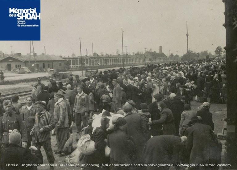 immagine_Mostra Auschwitz.jpg